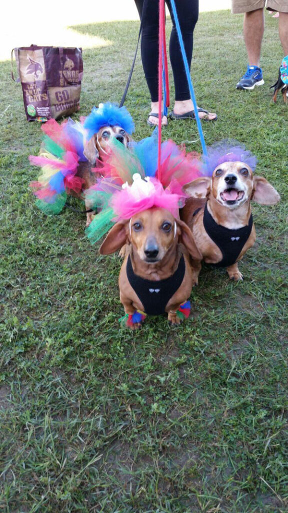 Pets like this trio of dachshunds are eligible to enter Saturday's pet costume in Los Fresnos.