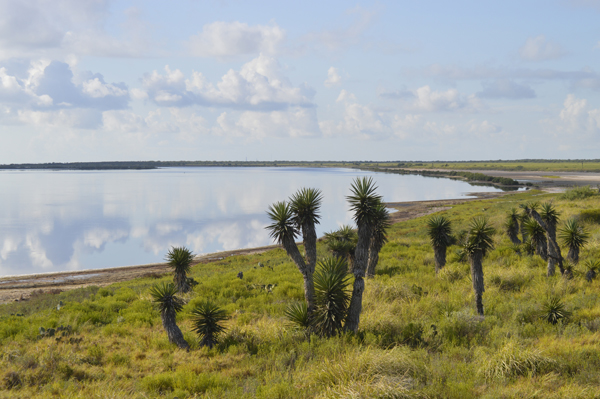 Laguna-Madre-shoreline-from-Plover-Point